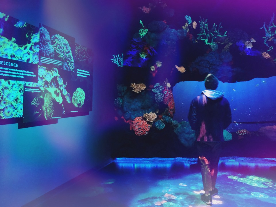 National Geographic Encounter: Ocean Odyssey in Times Square NYC